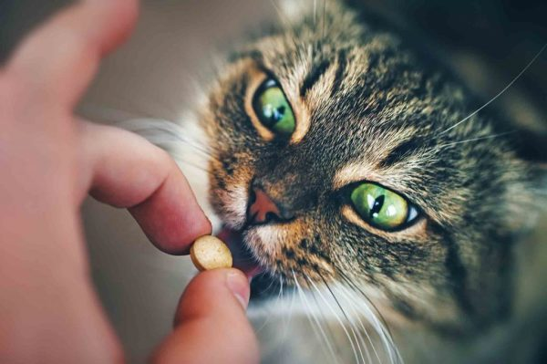 Pet Pill Pockets for Better Dental Health